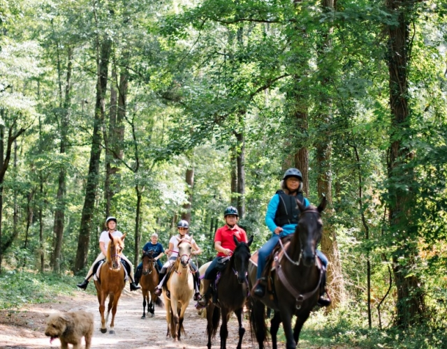 Rebel Ranch Horse Tours - Visit Aiken SC