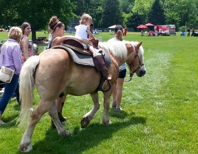 Willow Creek Petting Zoo Amp Pony Rides Visit Aiken Sc