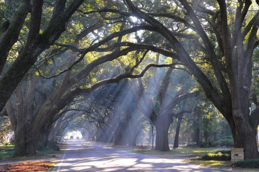 Tips For Photographing Aiken S Famous South Boundary